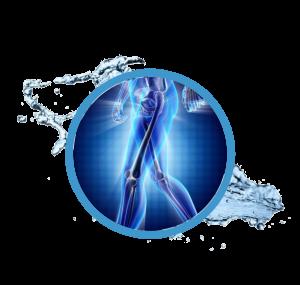 3d rendering showing skeleton to demonstrate bone density